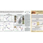 SSAR Victor Hutchison Student Poster Award Winners for 2017 Announced