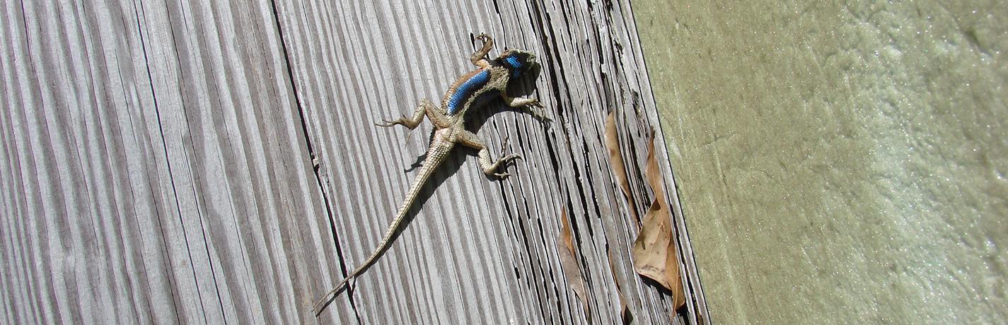 Behind the Scenes Pt. 5: Dead lizard mystery