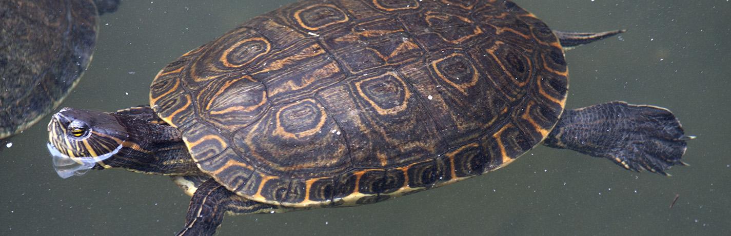 Herpetology - Wikipedia