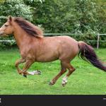 Beautiful Horse Running Image Stock Photo 8290371