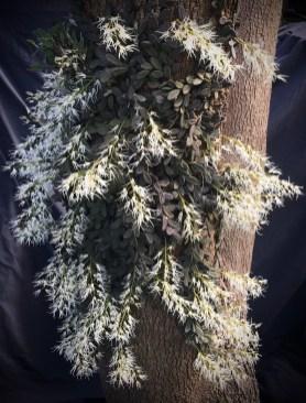 Dockrillia Linguiformis