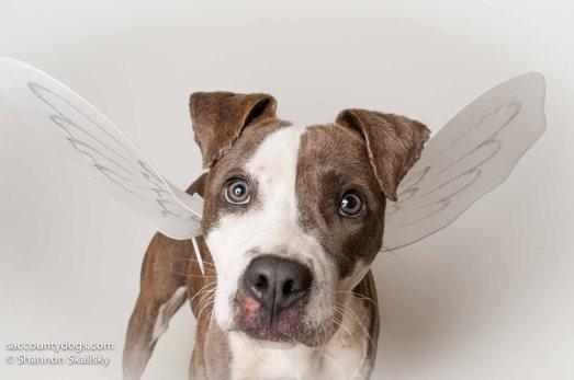 Shenzi - foster-to-adopt