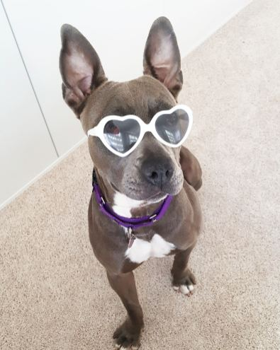 Harper_A301140 Glasses