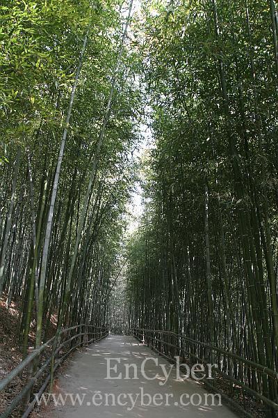 상상속의 담양은 길 양쪽에 대나무 밭이 있다.