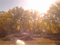 Autumn trees in Colorado.