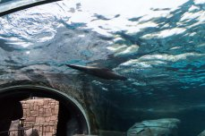 The seal tunnel.