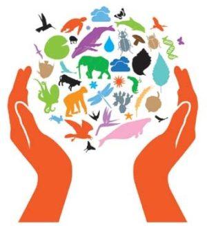 biodiversite_web