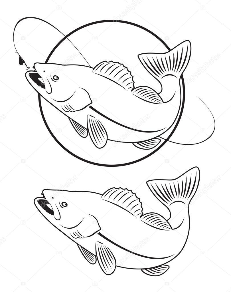 Walleye Coloring Pages
