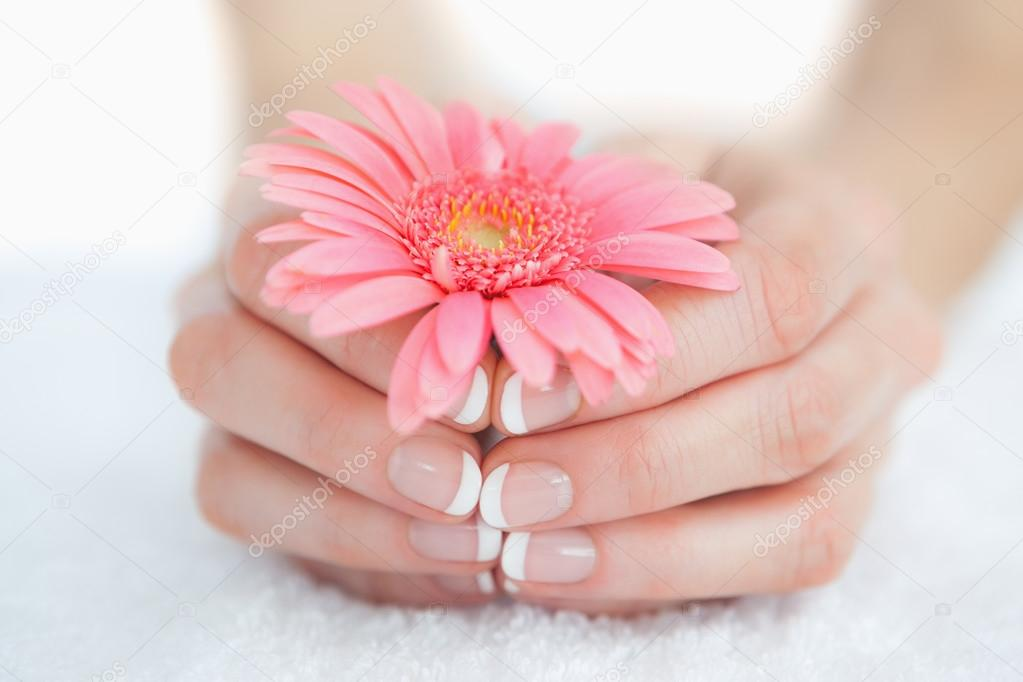 French Manicured Hands Holding Flower Stock Photo