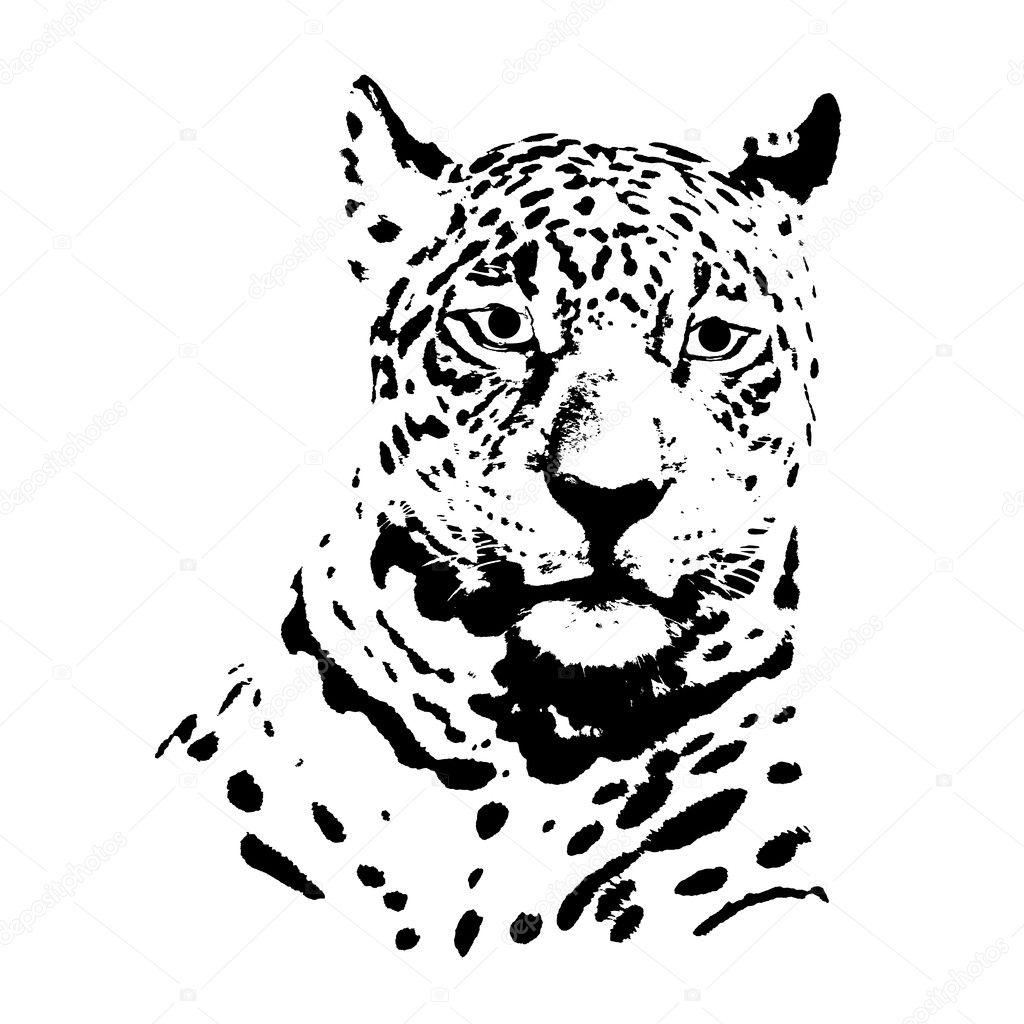 Cabeca De Jaguar