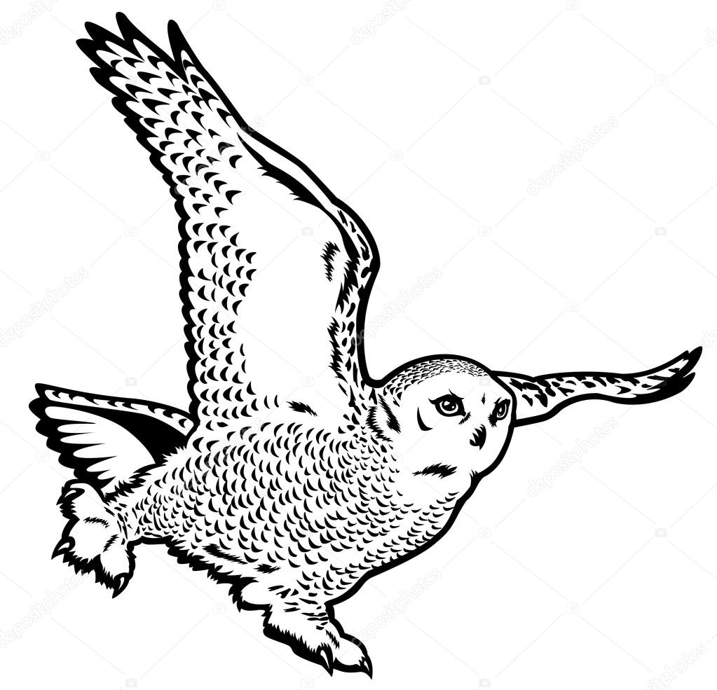 snowy owl coloring page owl coloring pages patterns snowy owl