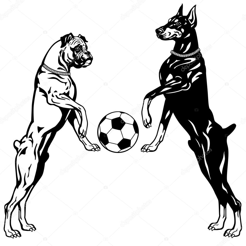 Doberman And Boxer Black White