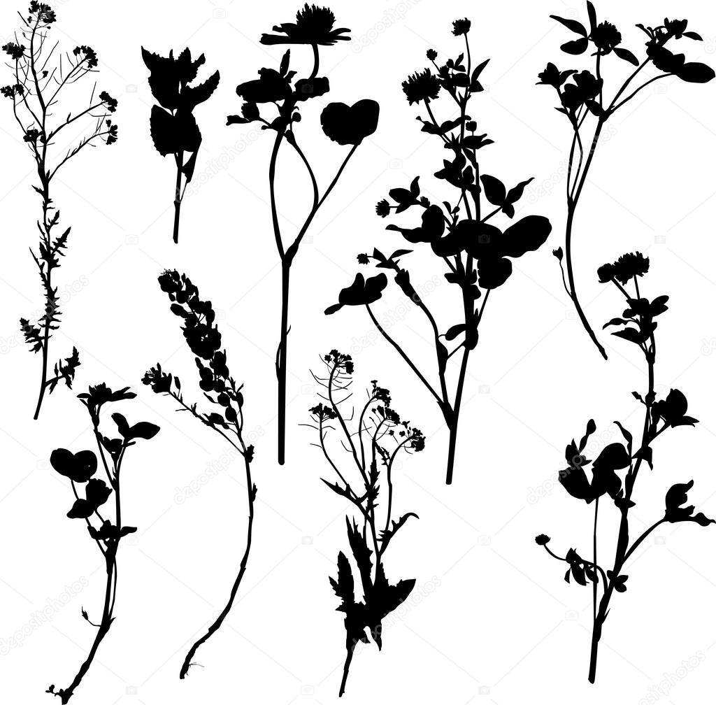 Set Of Silhouette By Herbs And Flowers