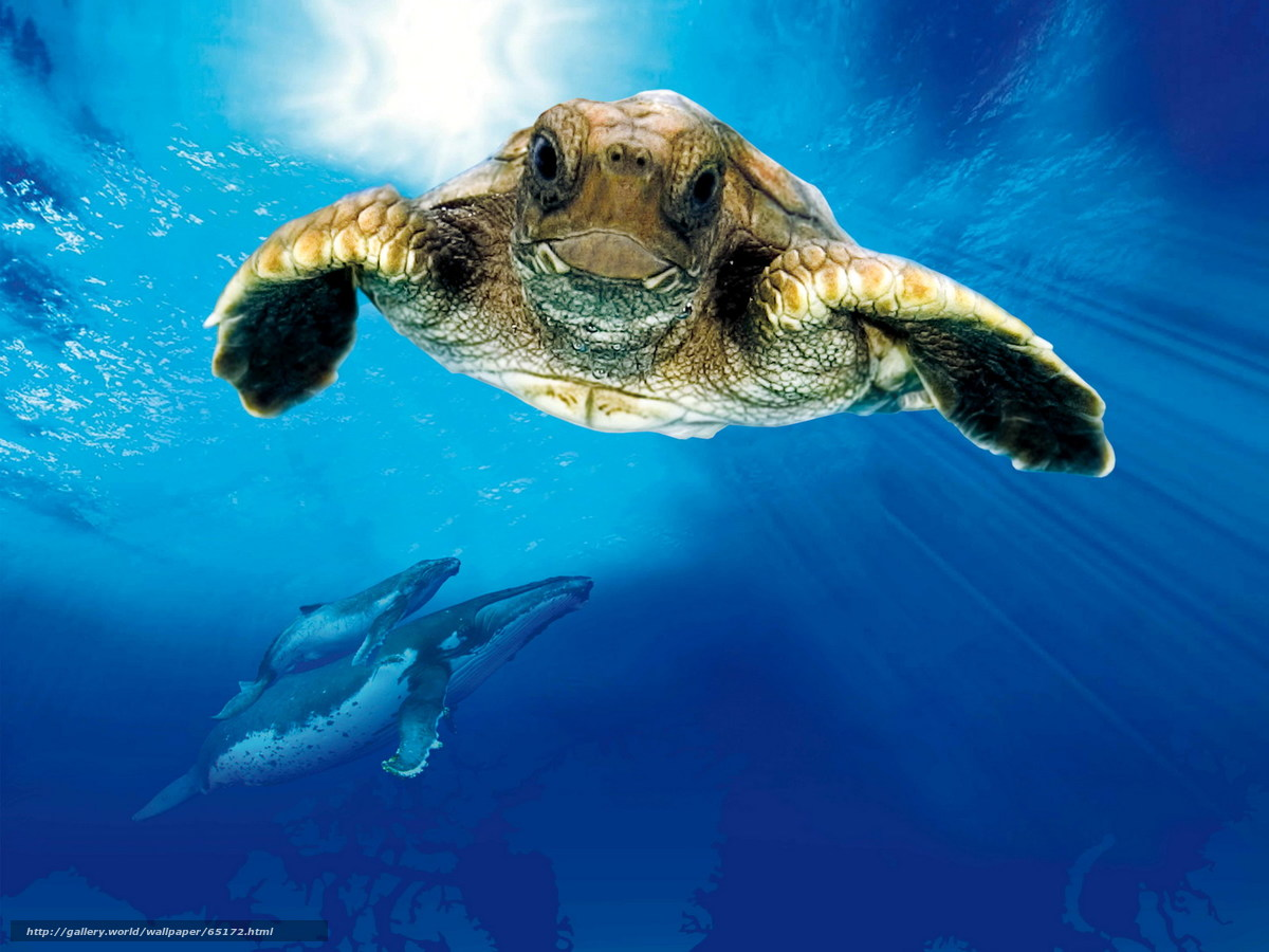 Est100 Some Photos Turtle The Incredible Journey