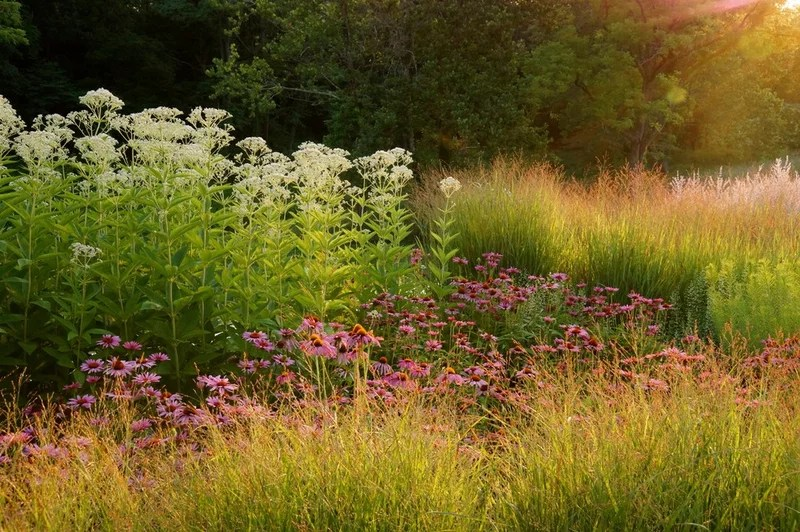 traditional landscape by Adam Woodruff + Associates, Garden Artisans