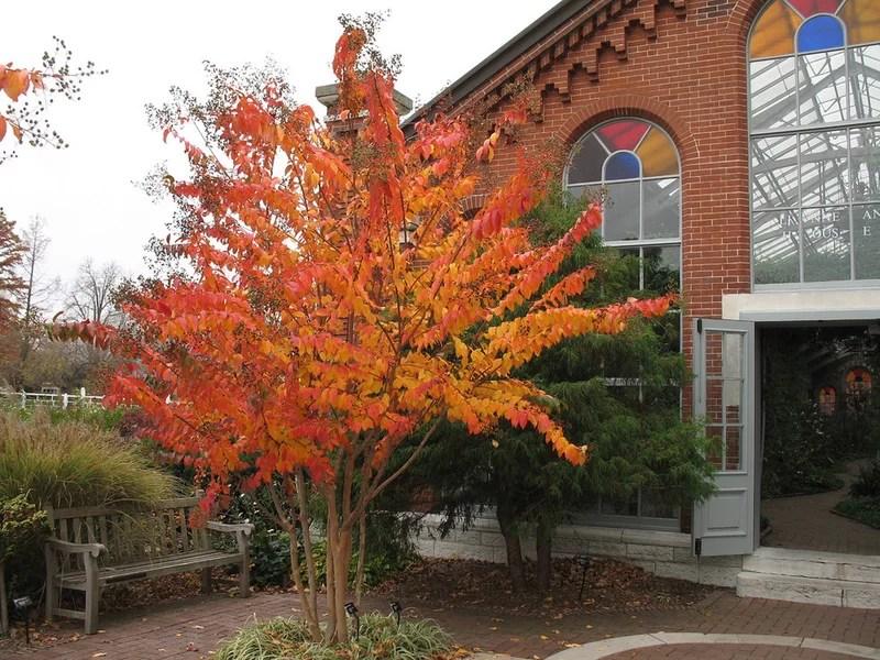Traditional Landscape by Missouri Botanical Garden