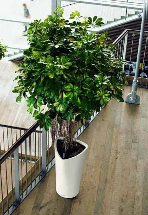 which tall potted plants are great for
