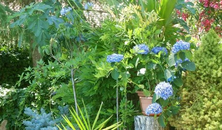 Jardín de la semana: Tertulias y flores azules en la Sierra de Madrid
