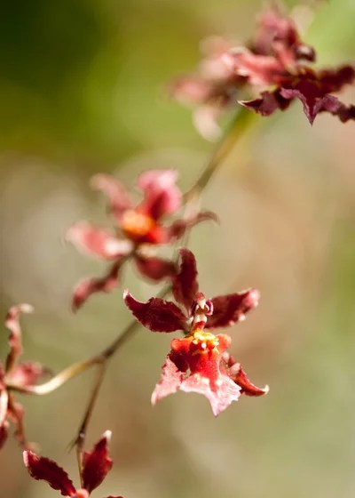 Giardino by The New York Botanical Garden