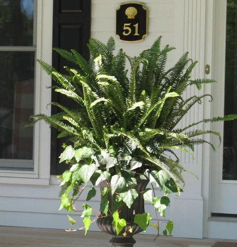 Fern Planter Houzz