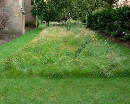 Best Planting Wildflower Meadow Design Ideas Amp Remodel