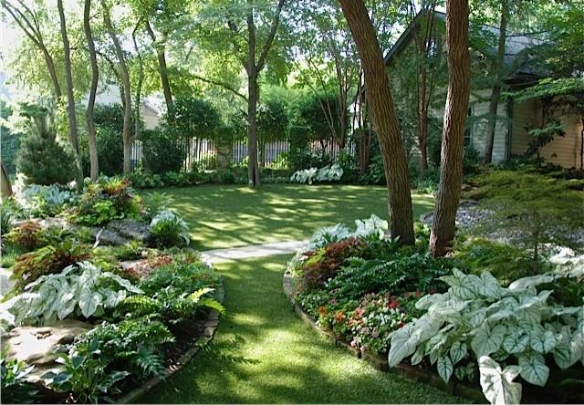 Natural Tropical Landscape