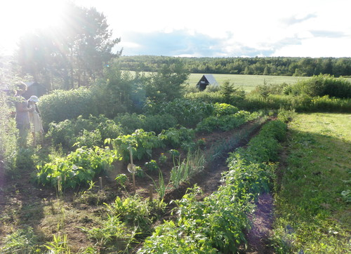 row garden