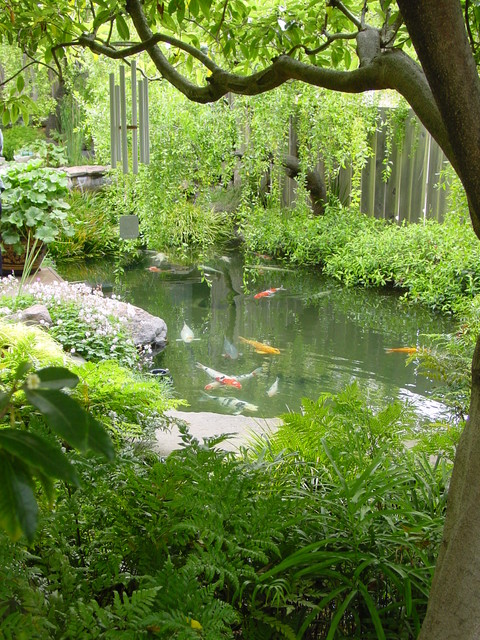Fish Design Ideas Pond Small