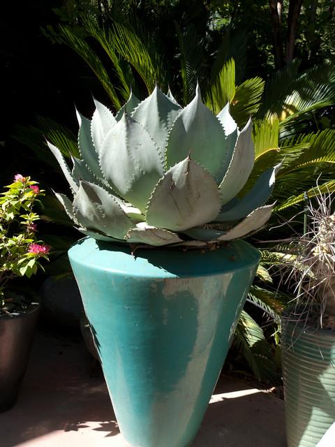 Succulent Plants And Pots Eclectic Landscape Phoenix