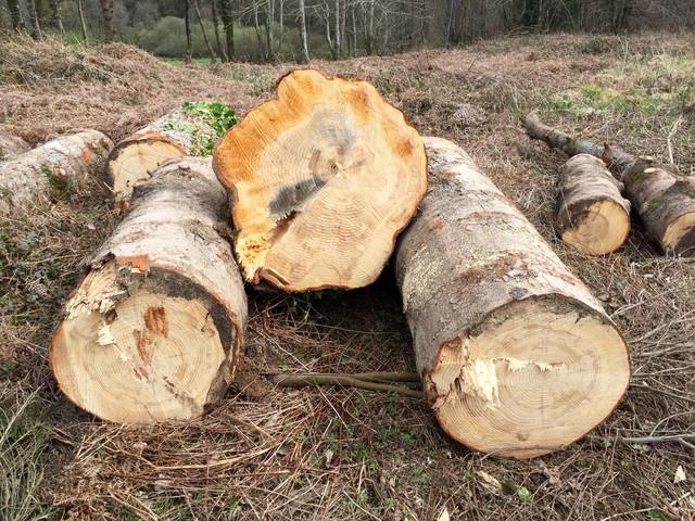 diy transformer un rondin de bois en
