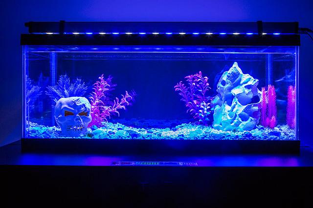 Blue Led Lights Marine Tank