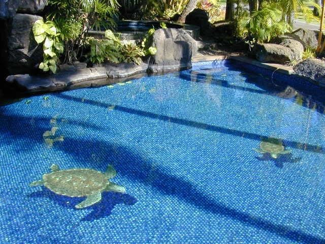 sea turtle pool tile design for paul