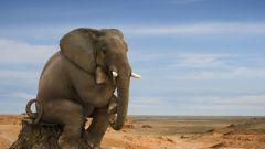 Perché l'elefante ha un lungo tronco