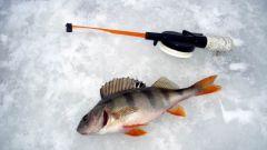 Как лучше ловить рыбу зимой