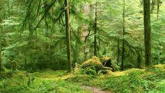 چرا جنگل ها به عنوان ریه های سبز نامیده می شوند