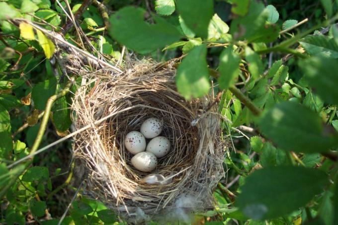 Найбільші гнізда серед птахів. Все найцікавіше в одному журналі