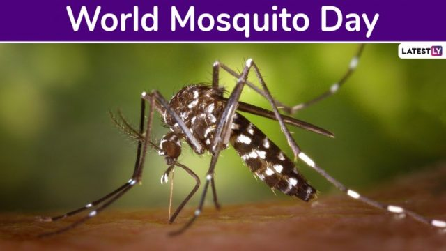 #worldmosquitoday