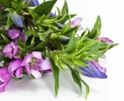 敬老の日 プレゼント 花 種類