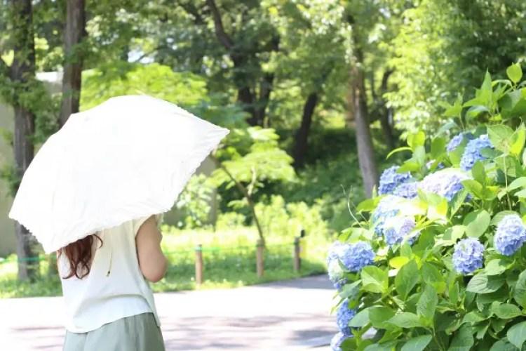 日傘 効果 何年