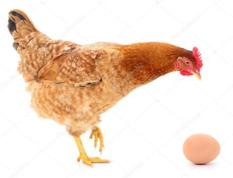 Αποτέλεσμα εικόνας για κότα με αυγό