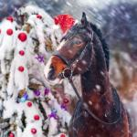 ᐈ Christmas With Horses Stock Photos Royalty Free Christmas Horse Images Download On Depositphotos