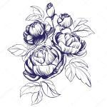 Floral Blooming Rose Branch Vector Illustration Sketch Vector Image By C Vladischern Vector Stock 120859946