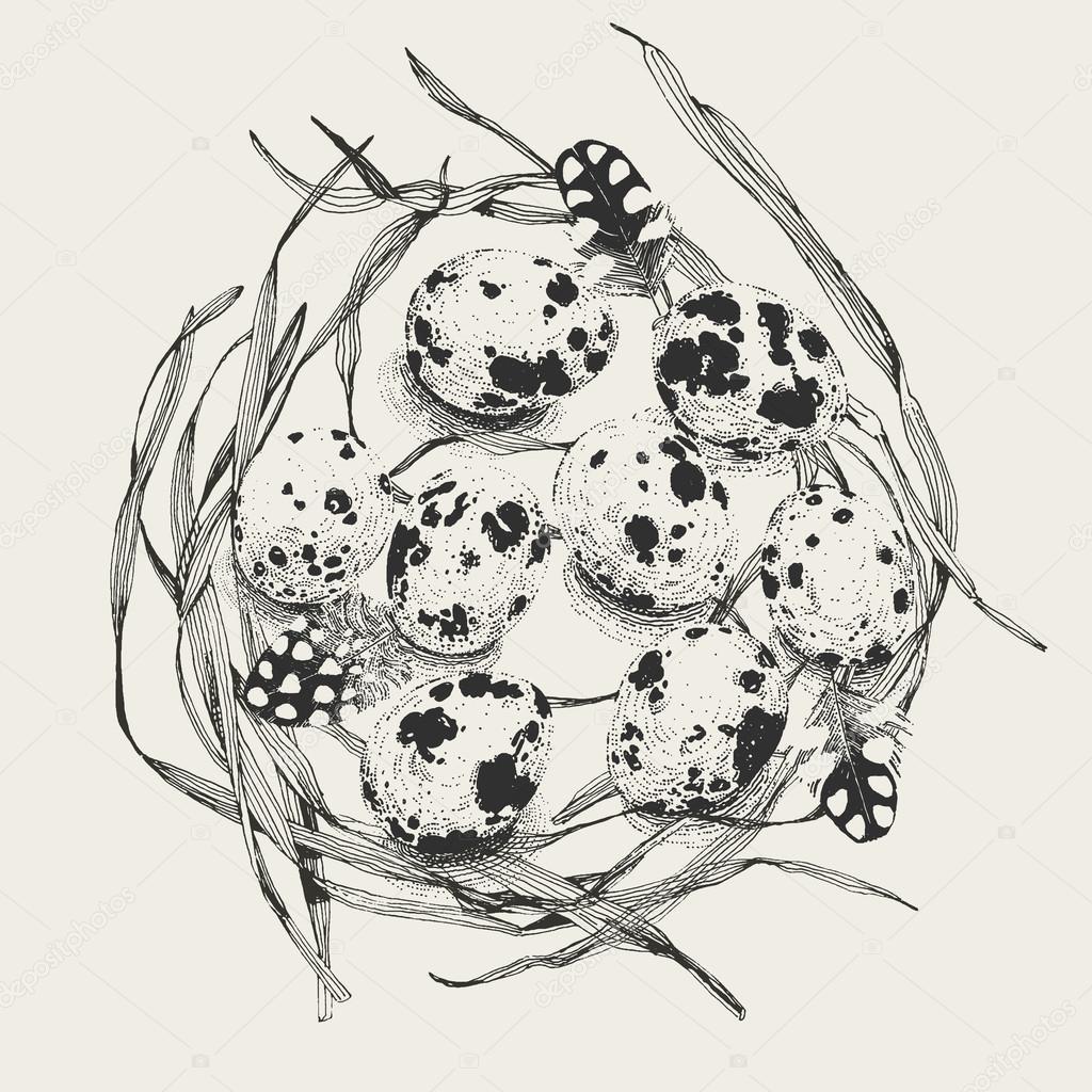 Huevos De Codorniz En Un Nido De Hierba