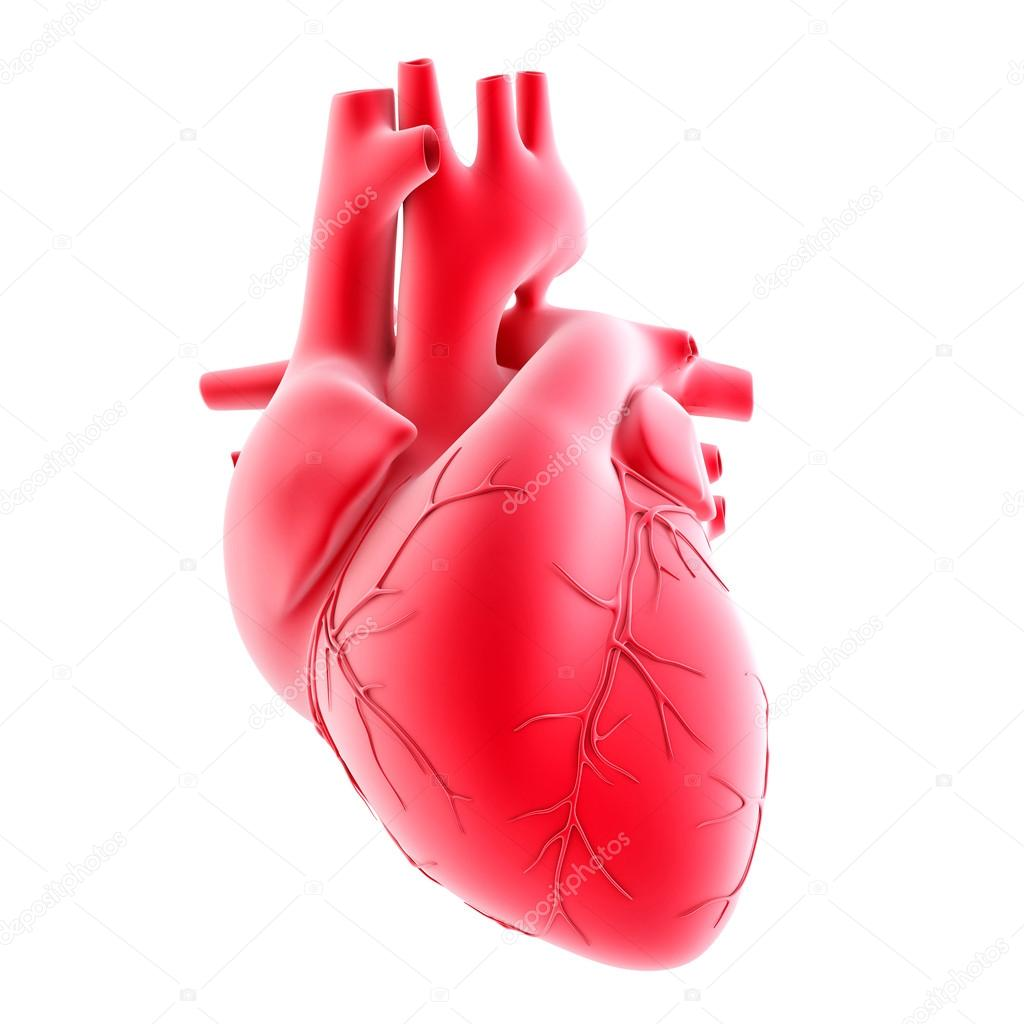 Human Heart 3d Image