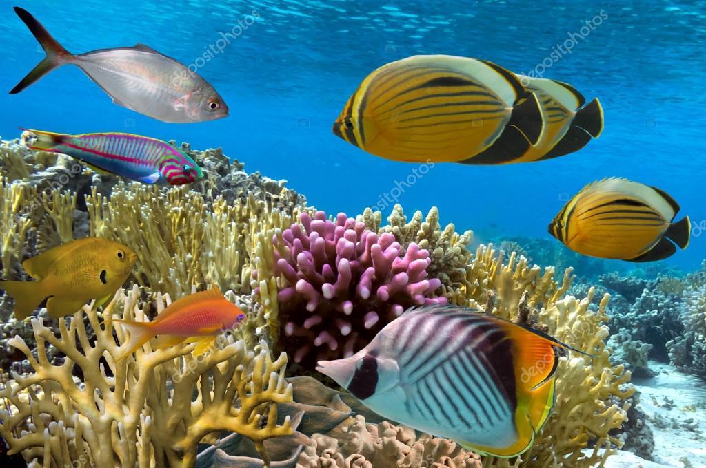 Un Data Coral