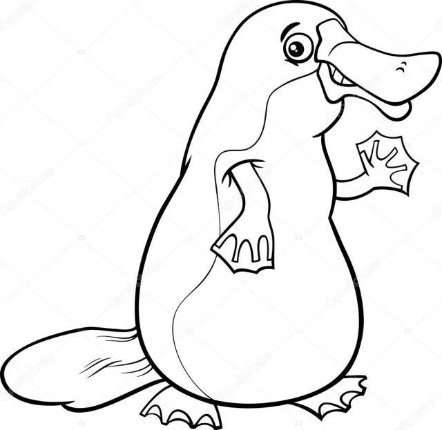 Platypus animal cartoon coloring page Stock Vector Image by