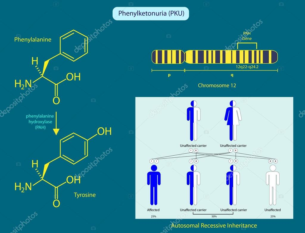 Phenylcetonurie