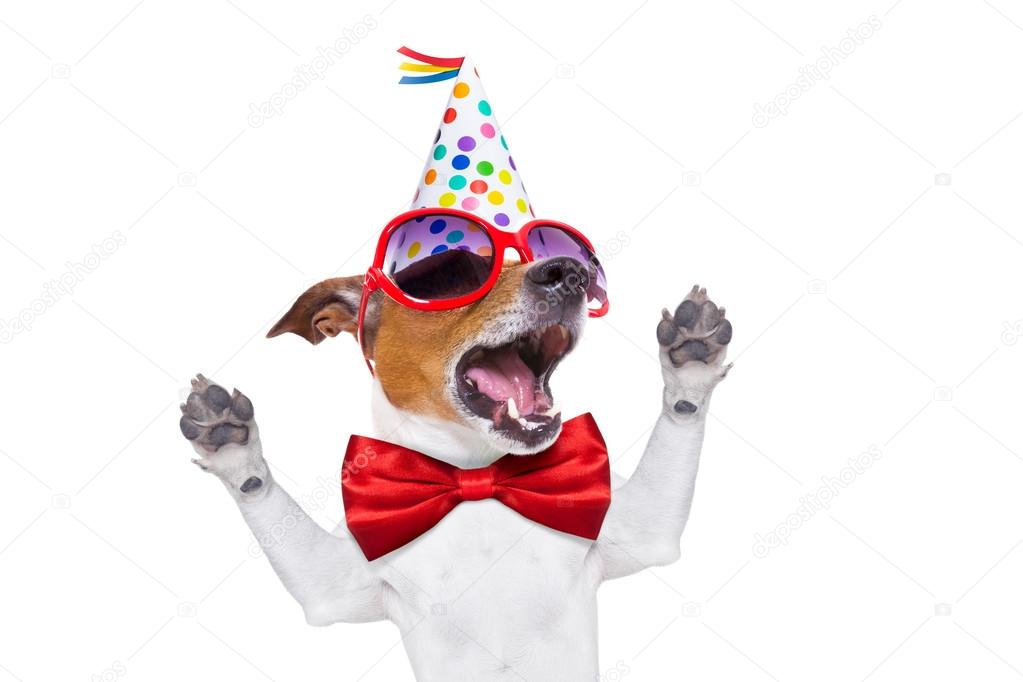 Happy Birthday Dog Singing Stock Photo Image By C Damedeeso 72784427
