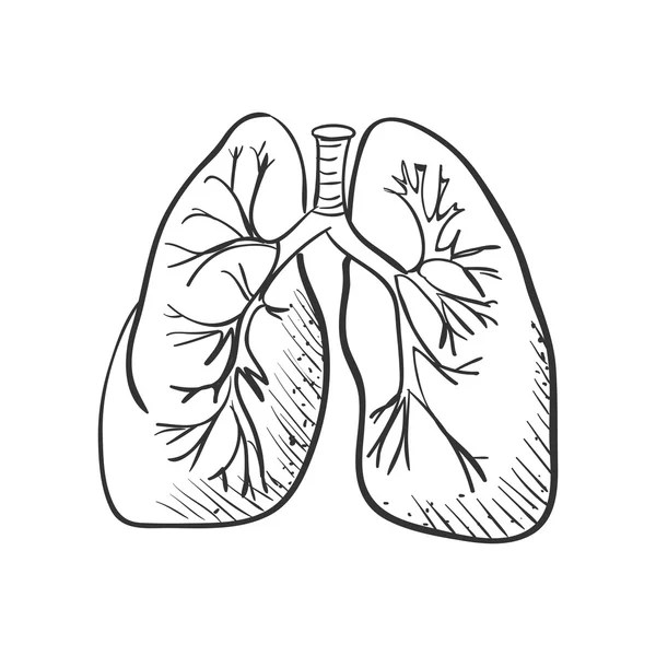 Lungs Draw Stock Vectors Royalty Free Lungs Draw