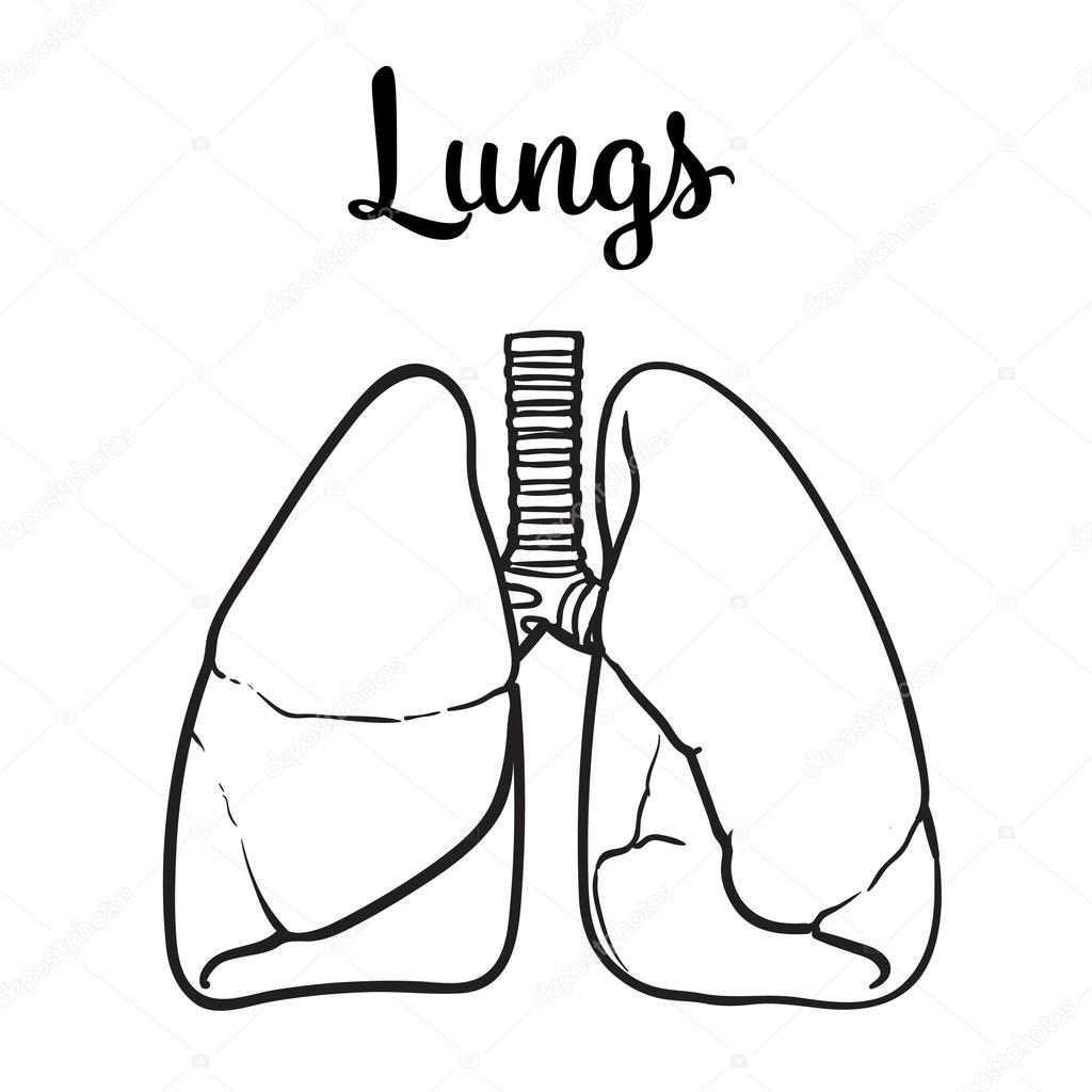 Lungs Of A Healthy Person Chitsye